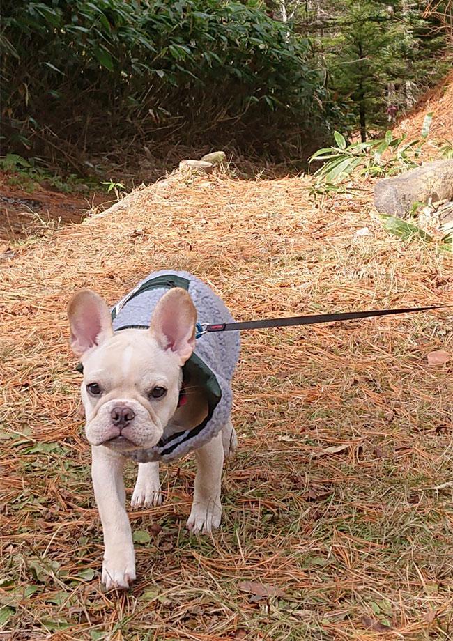 きたほくんのご家族さんからお便り届きました😊 シオから巣立った子犬写真館