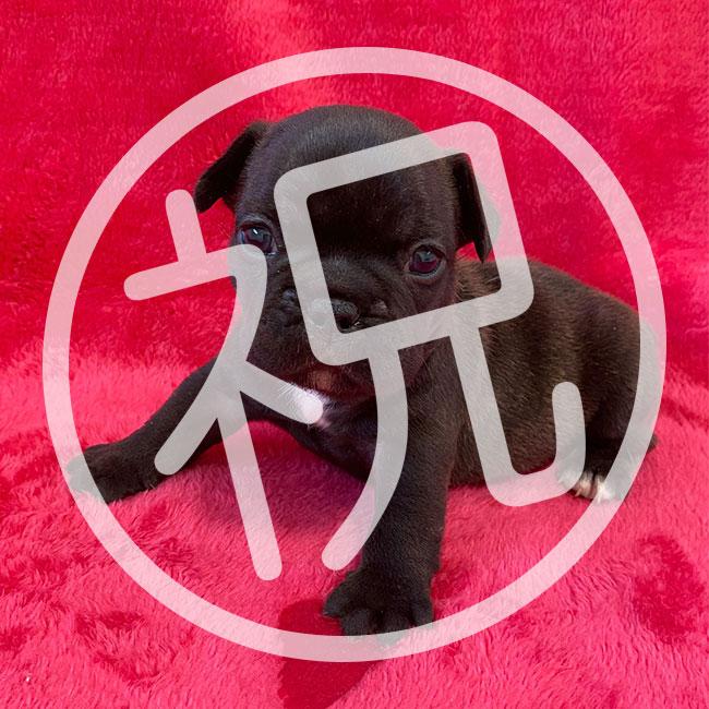 10/12生まれ ぶりママと梅雄パパの赤ちゃんの見学を開始します😊|新着情報と出産のお知らせ