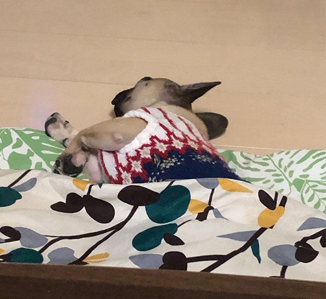 大翔くんのご家族さんからお便り届きました😊|シオから巣立った子犬写真館