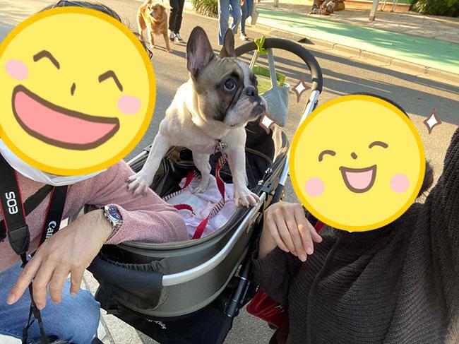 ひなたちゃんのご家族さんからお便り届きました😊|シオから巣立った子犬写真館