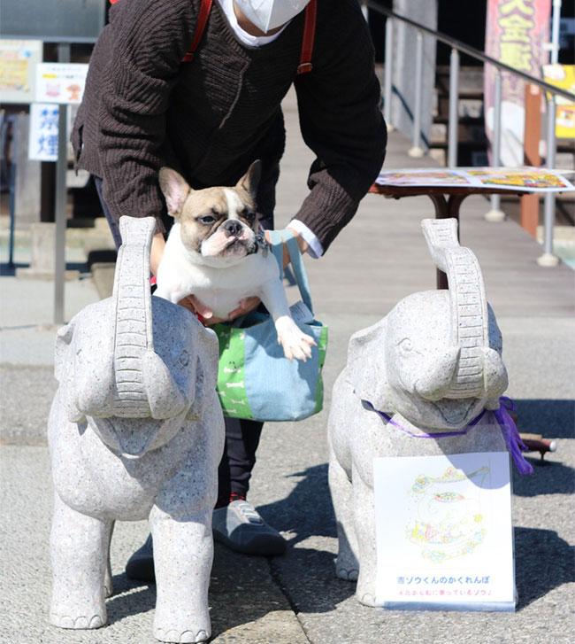 ひなたちゃんのご家族さんからお便り届きました😊 シオから巣立った子犬写真館