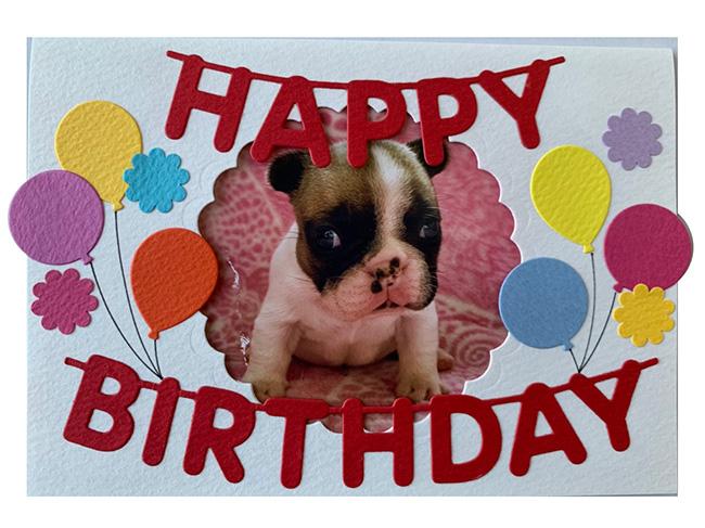 HAPPY BIRTHDAY🎂ひなたちゃん🎉|シオから巣立った子犬写真館