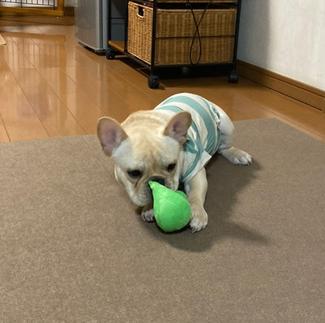海くんのご家族さんからお便り届きました😊 シオから巣立った子犬写真館