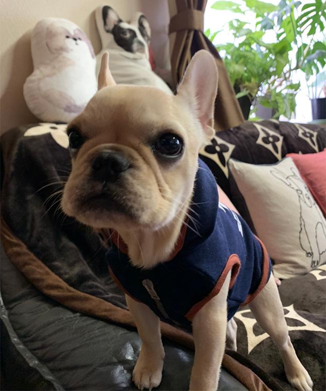 ラブちゃんのご家族さんからお便り届きました😊 シオから巣立った子犬写真館