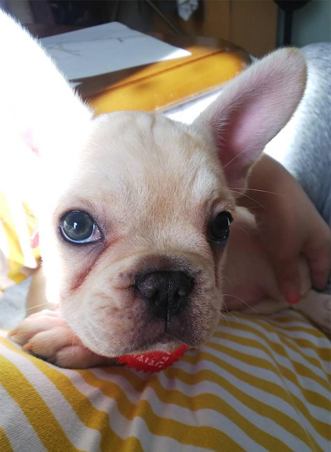 つぼみちゃんのご家族さんからお便り届きました😊|シオから巣立った子犬写真館