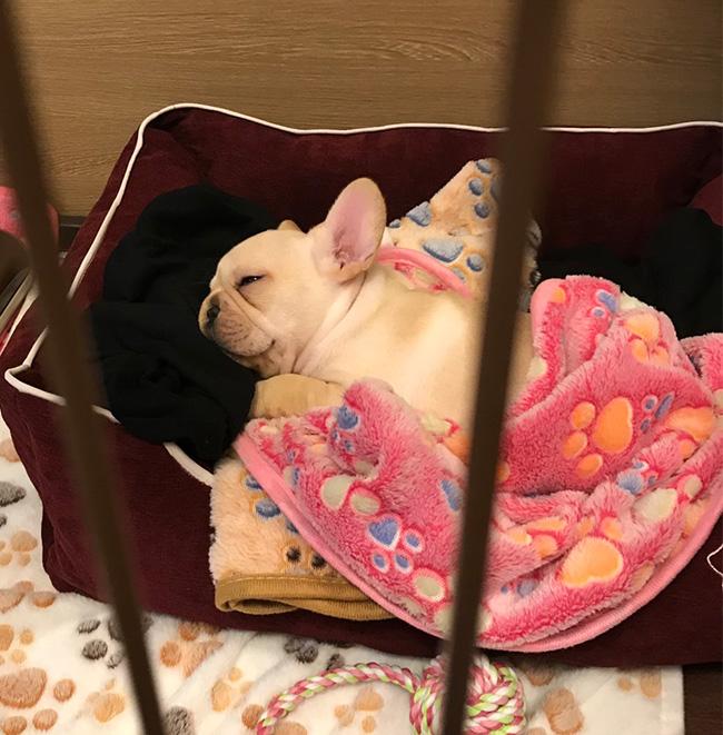 すやちゃんのご家族さんからお便り届きました😊 シオから巣立った子犬写真館