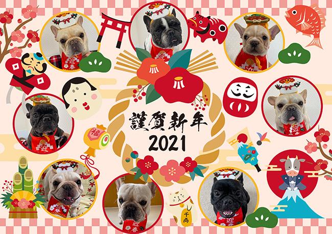謹賀新年|新着情報と出産のお知らせ