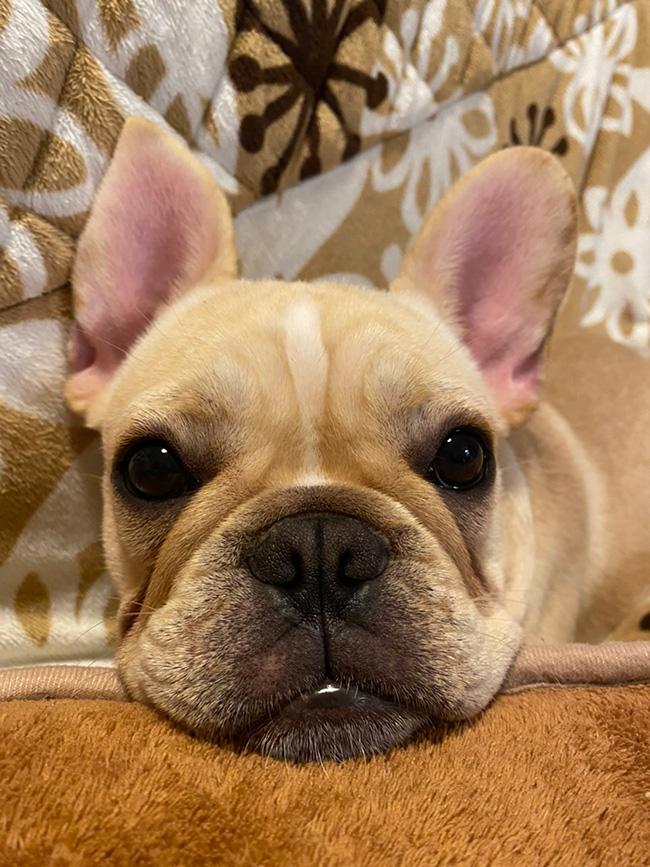 琥珀くんのご家族さんからお便り届きました😊 シオから巣立った子犬写真館
