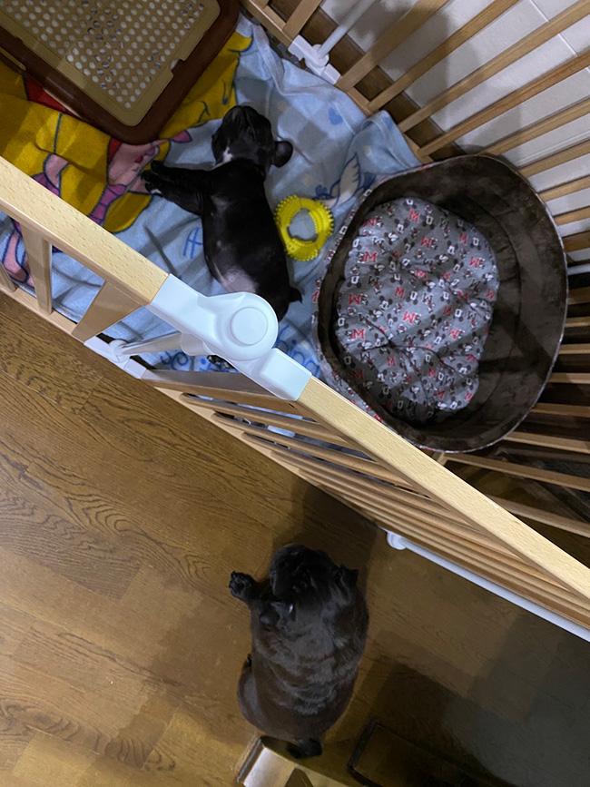 小梅ちゃんのご家族さんからお便り届きました😊 シオから巣立った子犬写真館