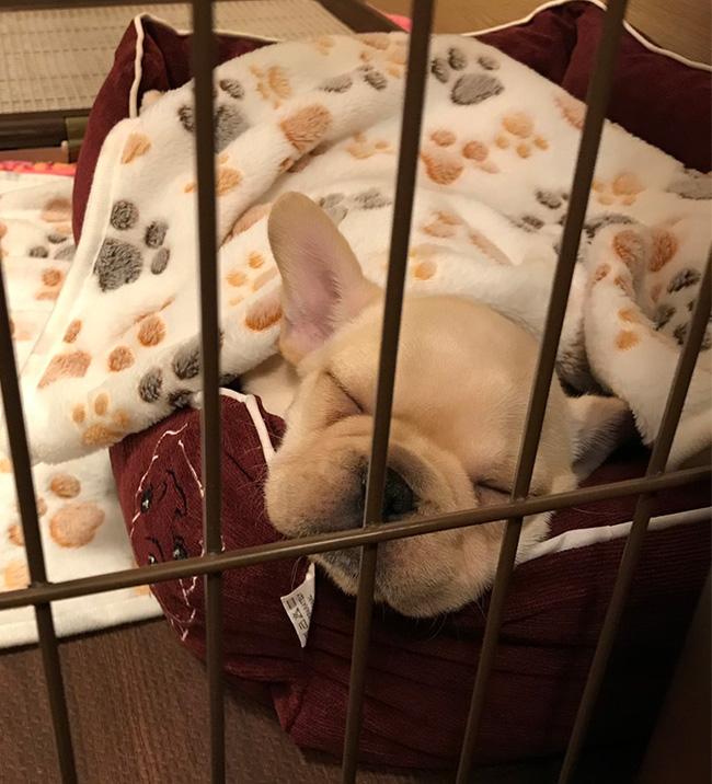 すやちゃんのご家族さんからお便り届きました😊|シオから巣立った子犬写真館