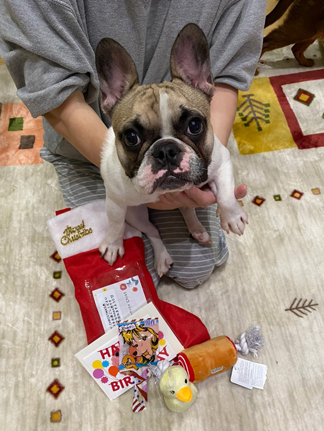 HAPPY BIRTHDAY🎂ひなたちゃん🎉 シオから巣立った子犬写真館