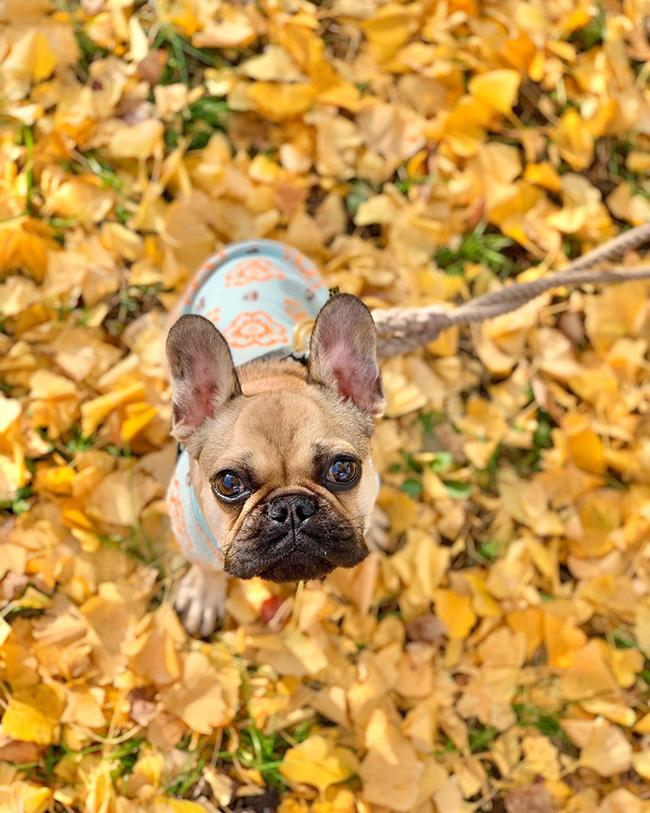HAPPY BIRTHDAY🎂うなじゅうちゃん🎉 シオから巣立った子犬写真館