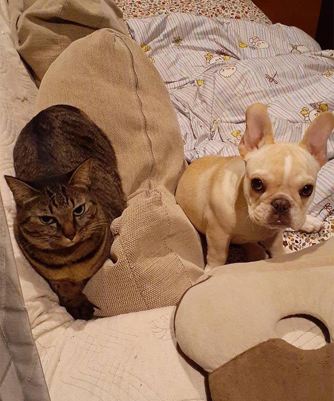 コアちゃんのご家族さんからお便り届きました😊|シオから巣立った子犬写真館