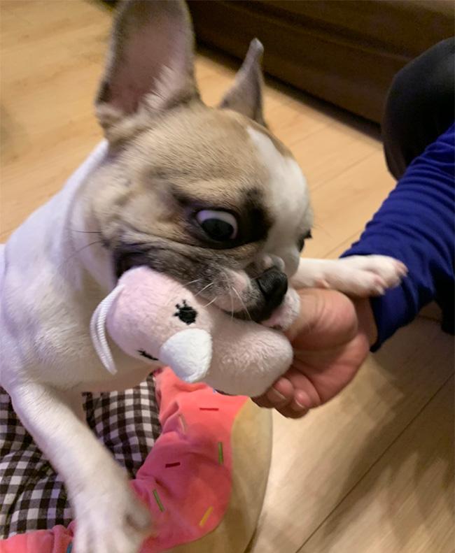 くれあちゃんのご家族さんからお便り届きました😊 シオから巣立った子犬写真館
