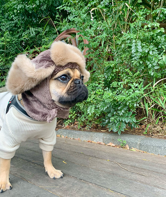 HAPPY BIRTHDAY🎂うなじゅうちゃん🎉|シオから巣立った子犬写真館