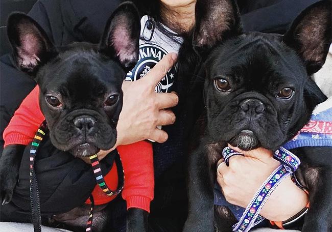カブくん&PUAちゃんのご家族さんからお便り届きました😊 シオから巣立った子犬写真館