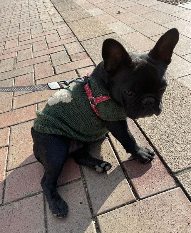 カブくんのご家族さんからお便り届きました😊|シオから巣立った子犬写真館