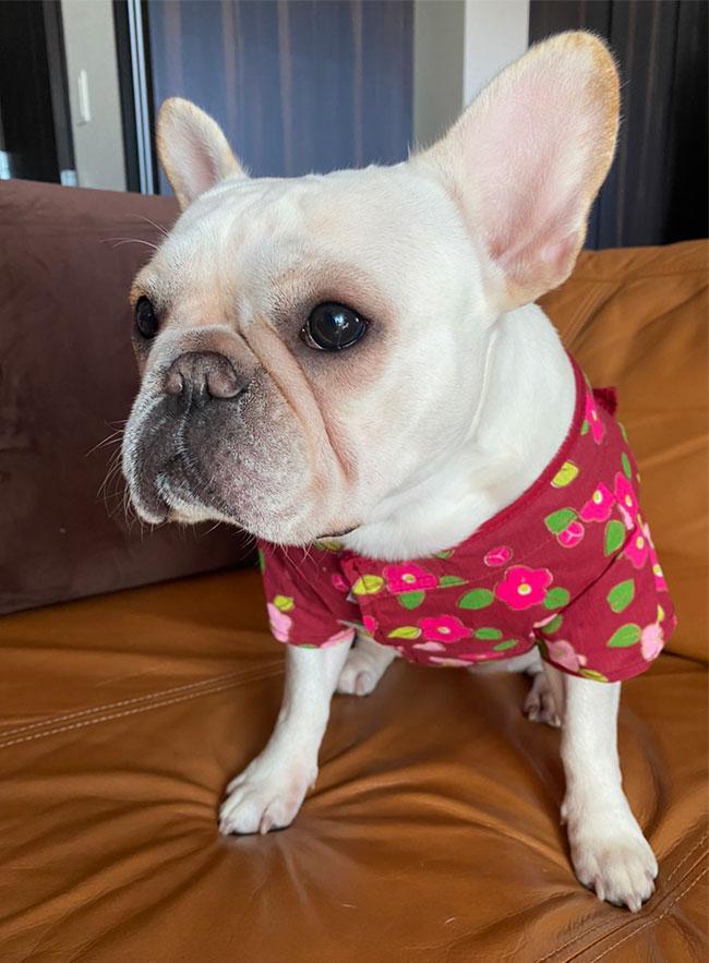 ブルちゃんのご家族さんからお便り届きました😊 シオから巣立った子犬写真館