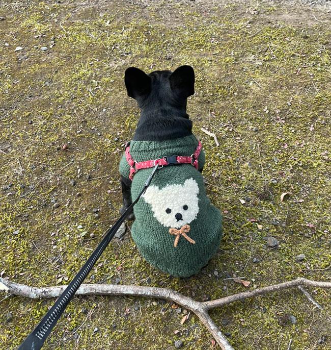 カブくんのご家族さんからお便り届きました😊 シオから巣立った子犬写真館