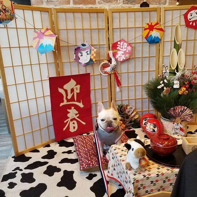 大福ちゃんのご家族さんからお便り届きました😊 シオから巣立った子犬写真館