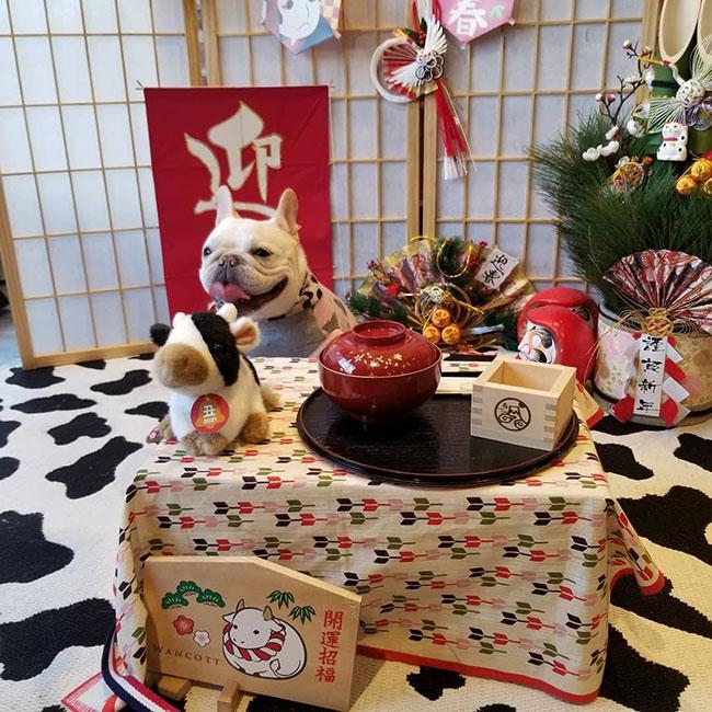 大福ちゃんのご家族さんからお便り届きました😊|シオから巣立った子犬写真館