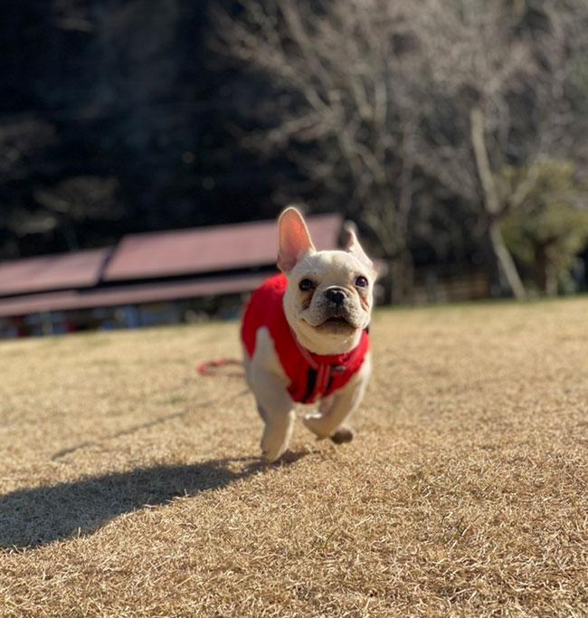 poohくんのご家族さんからお便り届きました😊|シオから巣立った子犬写真館
