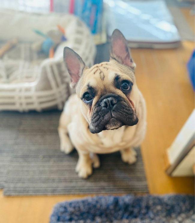 ドンベイ&ジンベイくんのご家族さんからお便り届きました😊 シオから巣立った子犬写真館
