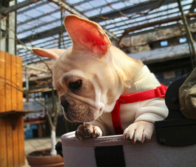 素野ちゃんのご家族さんからお便り届きました😊|シオから巣立った子犬写真館
