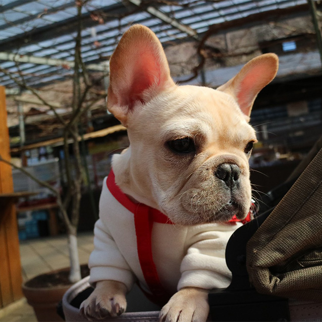 素野ちゃんのご家族さんからお便り届きました😊 シオから巣立った子犬写真館