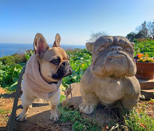 うなじゅうちゃんのご家族さんからお便り届きました😊 シオから巣立った子犬写真館