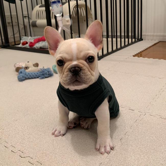 ぱんだこくんのご家族さんからお便り届きました😊|シオから巣立った子犬写真館