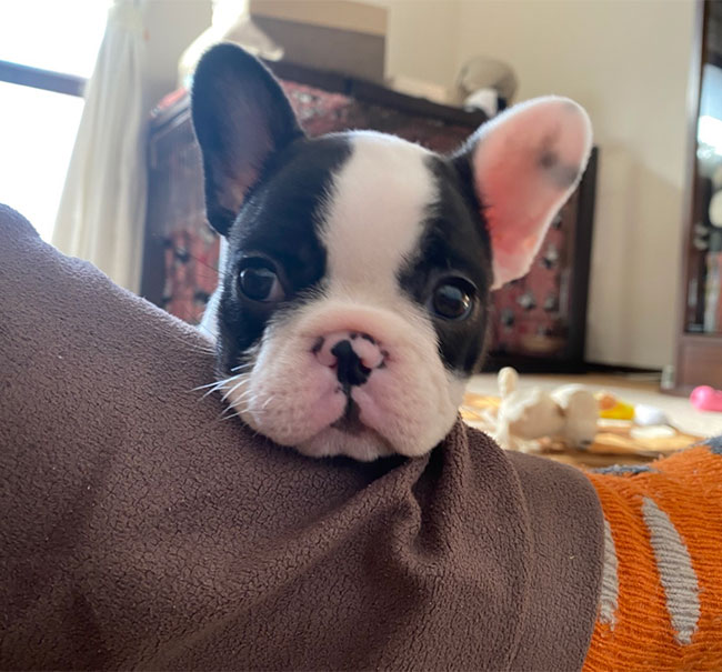 パンナちゃんのご家族さんからお便り届きました😊|シオから巣立った子犬写真館