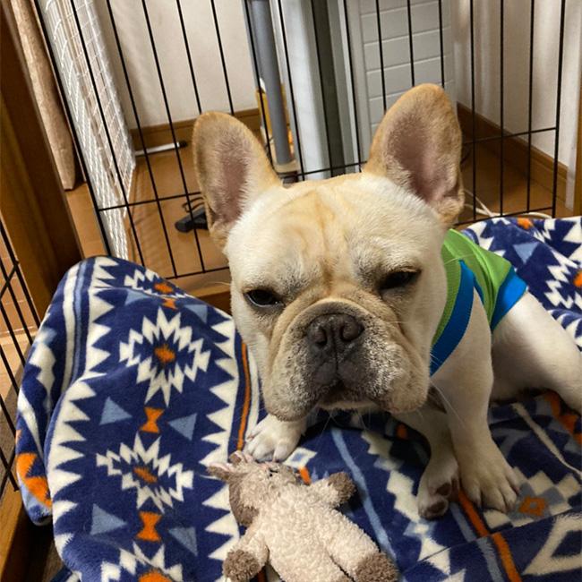 海くんのご家族さんからお便り届きました😊|シオから巣立った子犬写真館