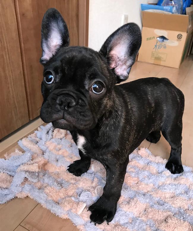 あんずちゃんのご家族さんからお便り届きました😊|シオから巣立った子犬写真館