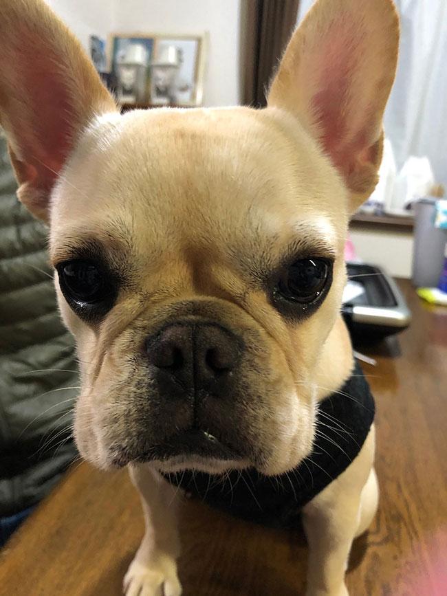 ラブちゃんのご家族さんからお便り届きました😊|シオから巣立った子犬写真館