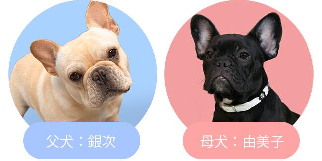 3/18由美子と銀次の赤ちゃんが生まれました😊|新着情報と出産のお知らせ