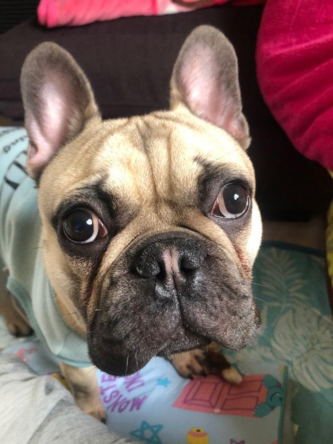 大翔くんのご家族さんからお便り届きました😊 シオから巣立った子犬写真館