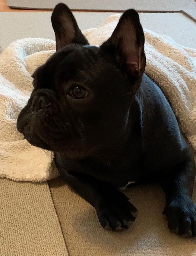 あむ太くんのご家族さんからお便り届きました😊 シオから巣立った子犬写真館