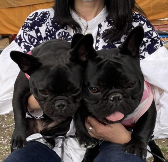 PUAちゃんのご家族さんからお便り届きました😊 シオから巣立った子犬写真館