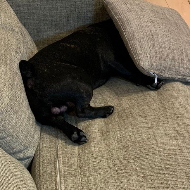 あむ太くんのご家族さんからお便り届きました😊|シオから巣立った子犬写真館