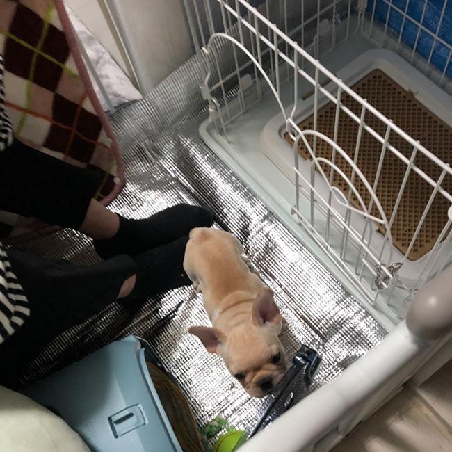 だいず君のご家族さんからお便り届きました😊 シオから巣立った子犬写真館