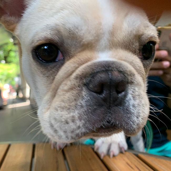 ぱんだこ君のご家族さんからお便り届きました😊 シオから巣立った子犬写真館