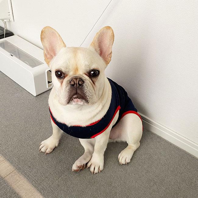マチコちゃんのご家族さんからお便り届きました😊|シオから巣立った子犬写真館