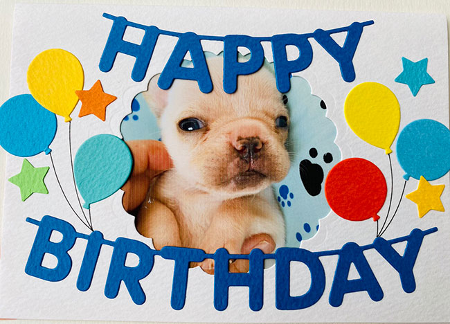 HAPPY BIRTHDAY🎂きたほくん🎉|シオから巣立った子犬写真館