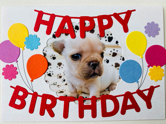 HAPPY BIRTHDAY🎂ラブちゃん🎉 シオから巣立った子犬写真館