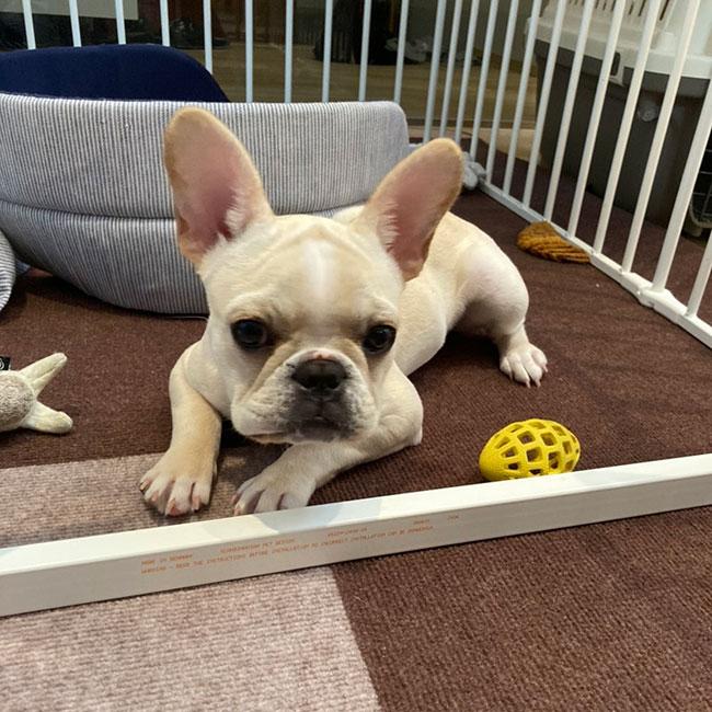 みるくちゃんのご家族さんからお便り届きました😊|シオから巣立った子犬写真館