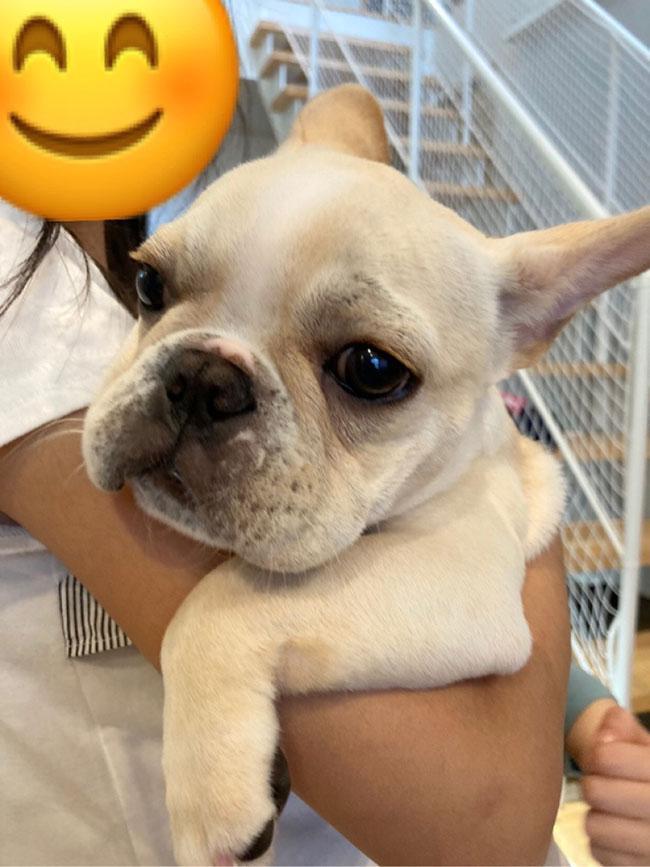 みるくちゃんのご家族さんからお便り届きました😊 シオから巣立った子犬写真館