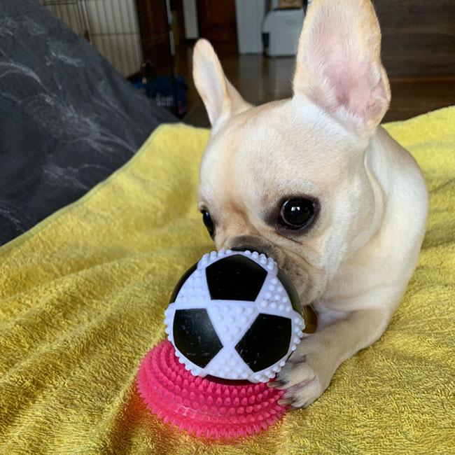 HAPPY BIRTHDAY🎂ラブちゃん🎉|シオから巣立った子犬写真館