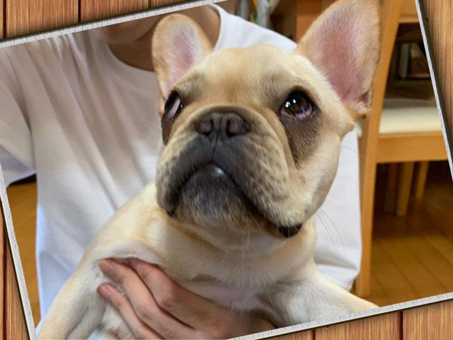 楽くんのご家族さんからお便り届きました😊 シオから巣立った子犬写真館