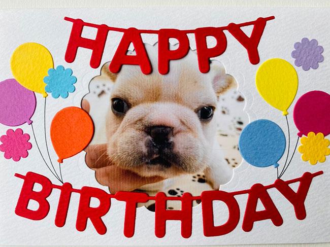 HAPPY BIRTHDAY🎂コアちゃん🎉|シオから巣立った子犬写真館
